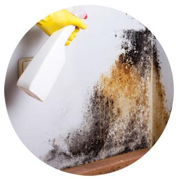 formas de limpiar el moho